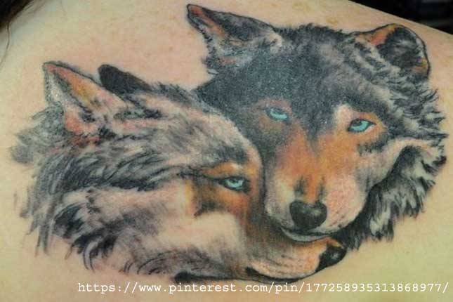 Pack of wolf